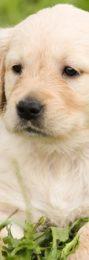 puppy-1207818_1280